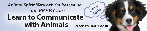 Animal Spirit Network is offering a Free Class - Learn to Communicate with Animals!