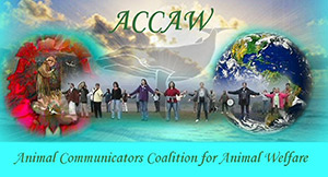 Animal Communicators Coalition for Animal Welfare