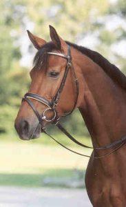 Horse_Bonnie